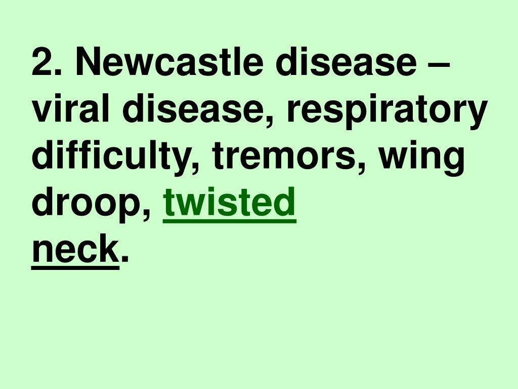2. Newcastle disease – viral disease, respiratory difficulty, tremors, wing droop,