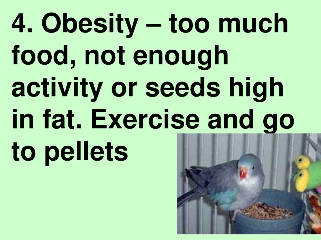 4. Obesity – too much food, not enough activity or seeds high in fat. Exercise and go to pellets