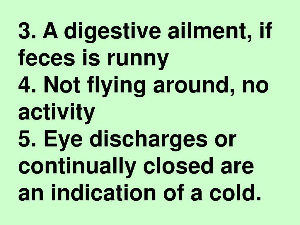 3. A digestive ailment, if feces is runny