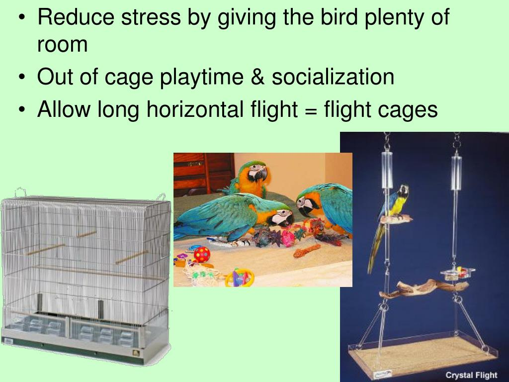 Reduce stress by giving the bird plenty of room