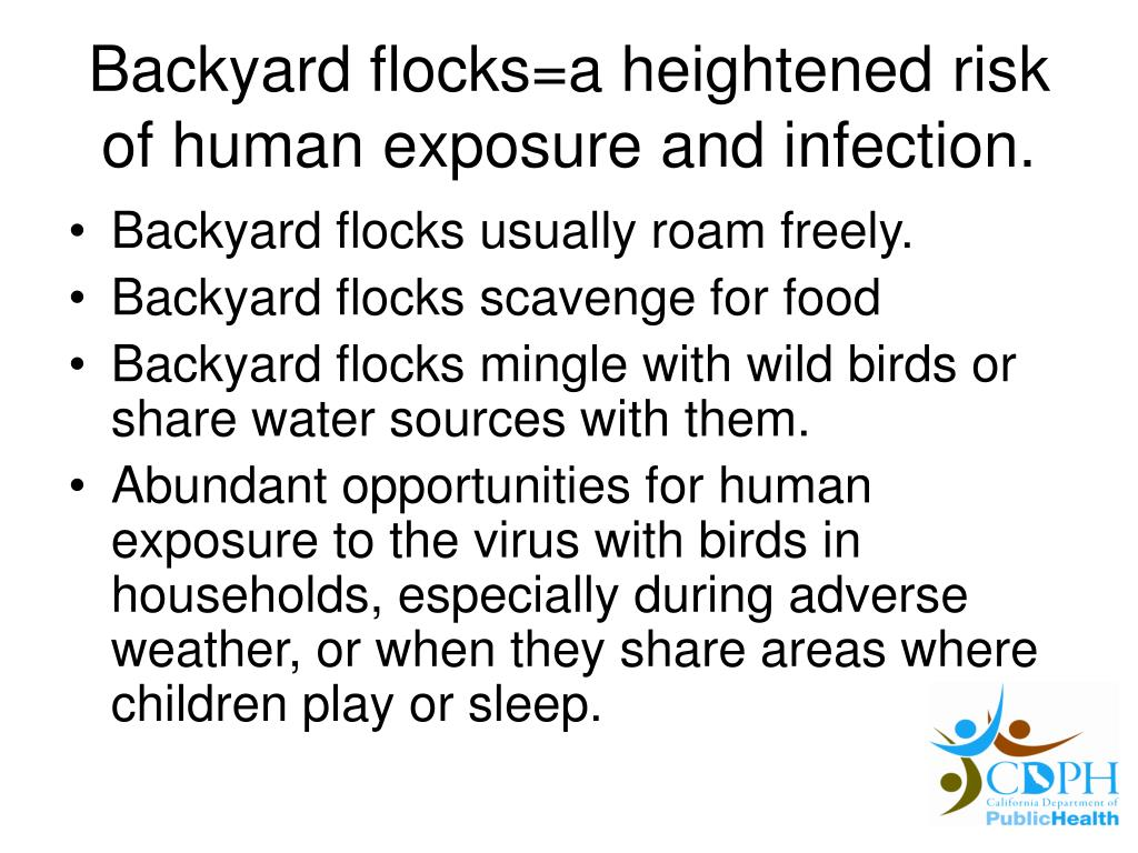Backyard flocks=a heightened risk of human exposure and infection.