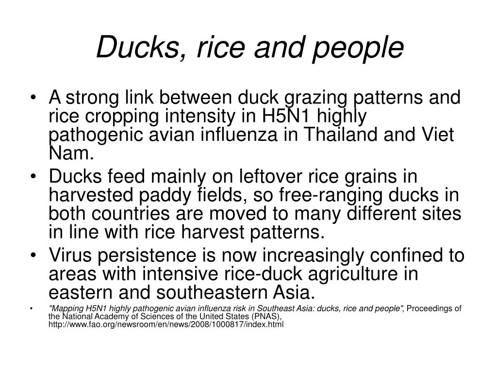 Ducks, rice and people