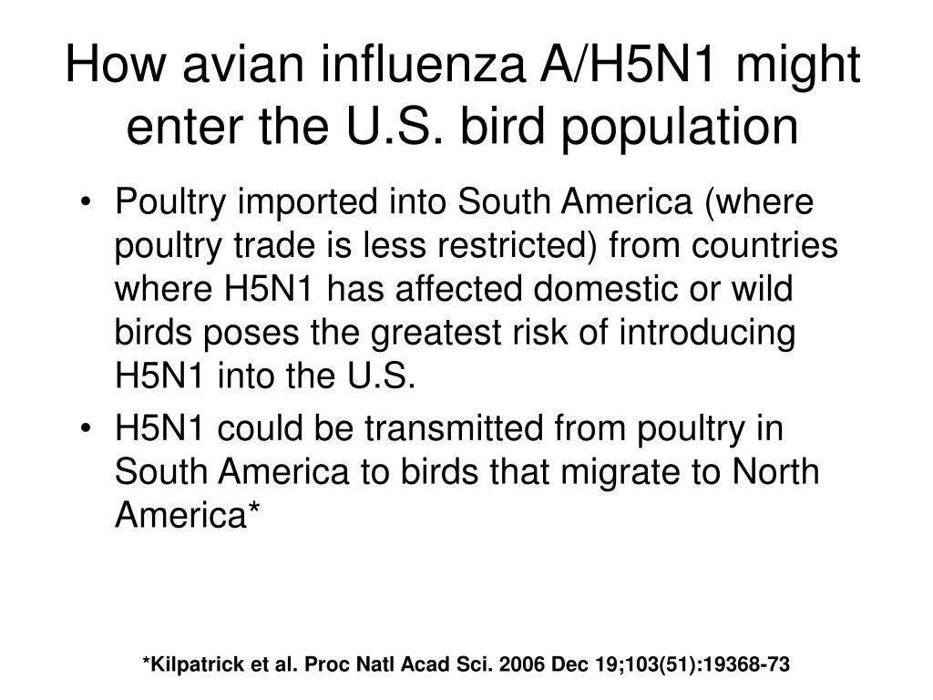 How avian influenza A/H5N1 might enter the U.S. bird population