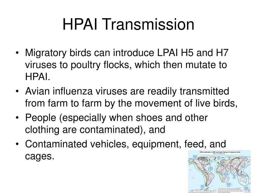 HPAI Transmission
