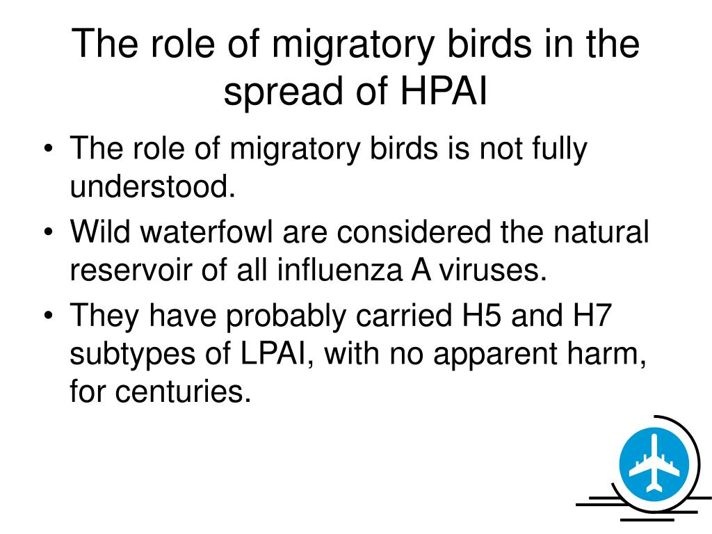 The role of migratory birds in the spread of HPAI