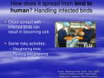 how does it spread from bird to human handling infected birds