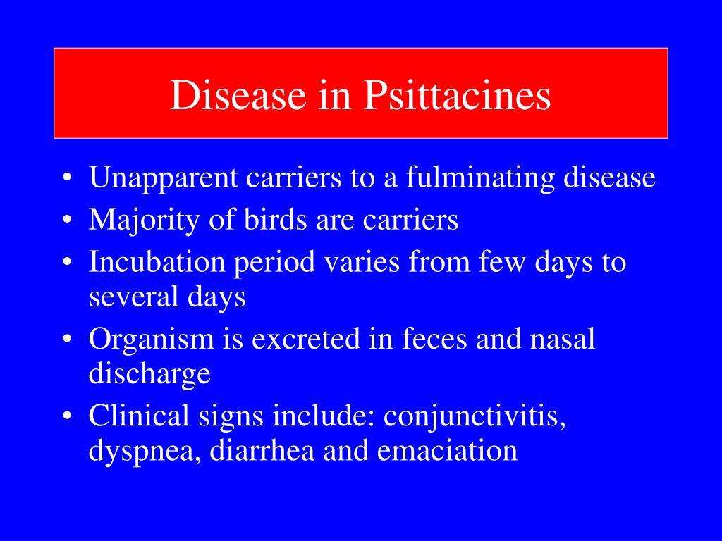 Disease in Psittacines
