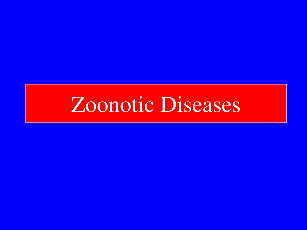 zoonotic diseases l.