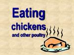 eating chickens and other poultry