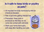 is it safe to keep birds or poultry as pets