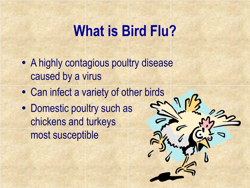 What is Bird Flu?