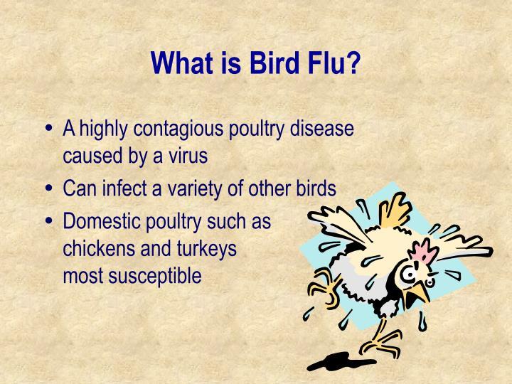 What is bird flu