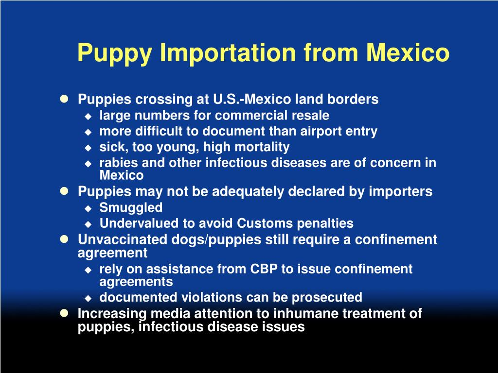 Puppy Importation from Mexico
