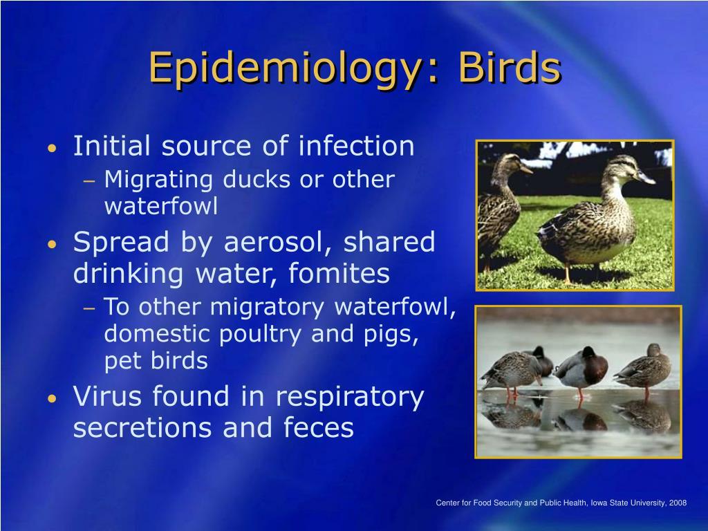 Epidemiology: Birds