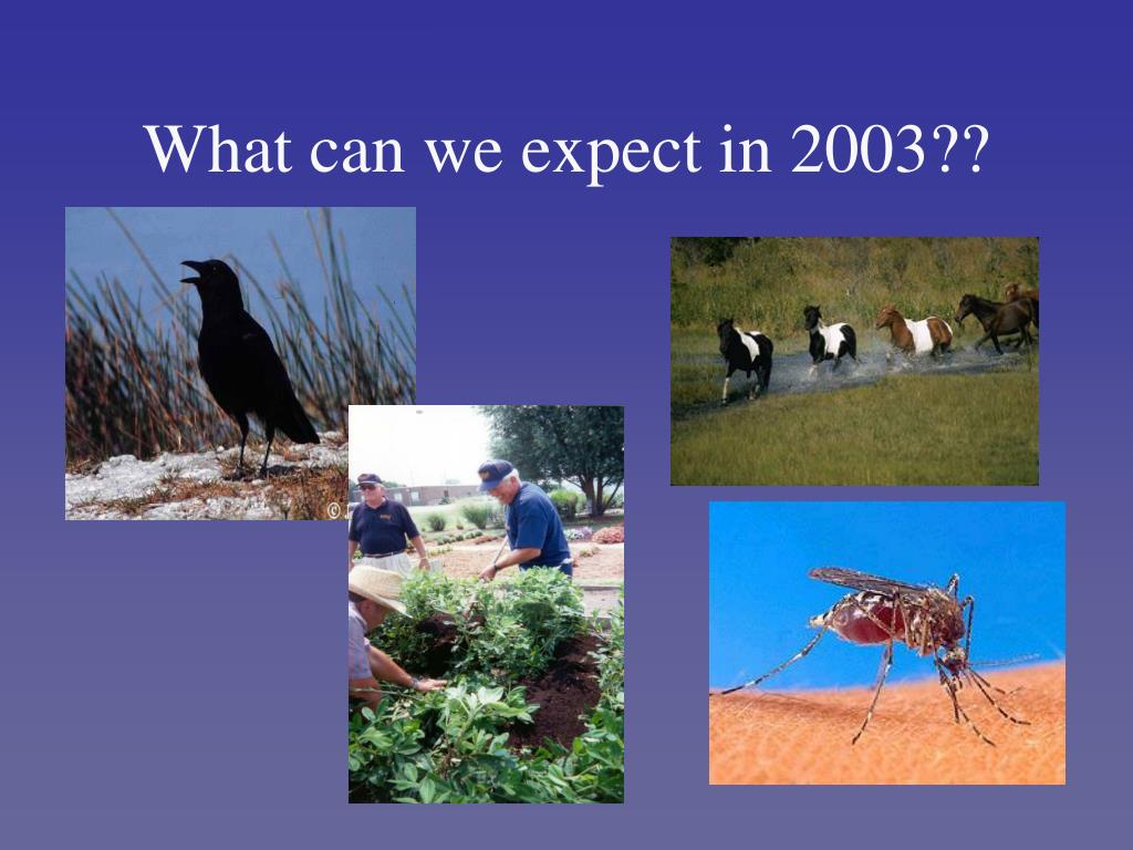 What can we expect in 2003??