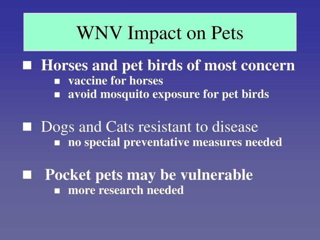 WNV Impact on Pets