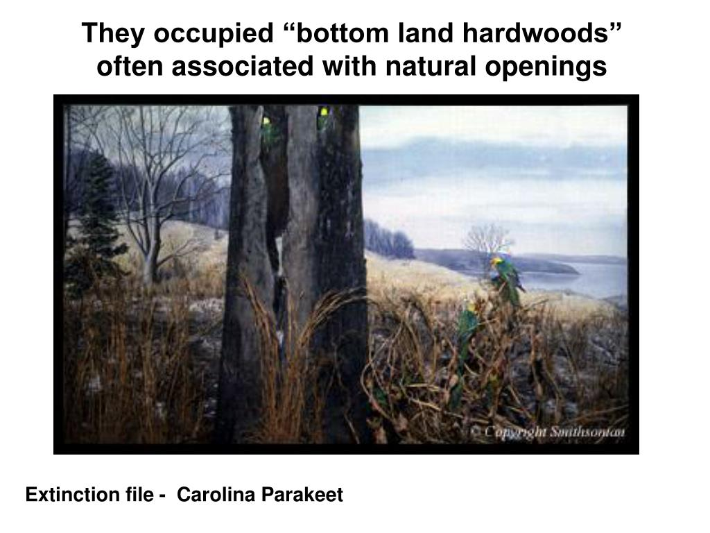 "They occupied ""bottom land hardwoods"" often associated with natural openings"