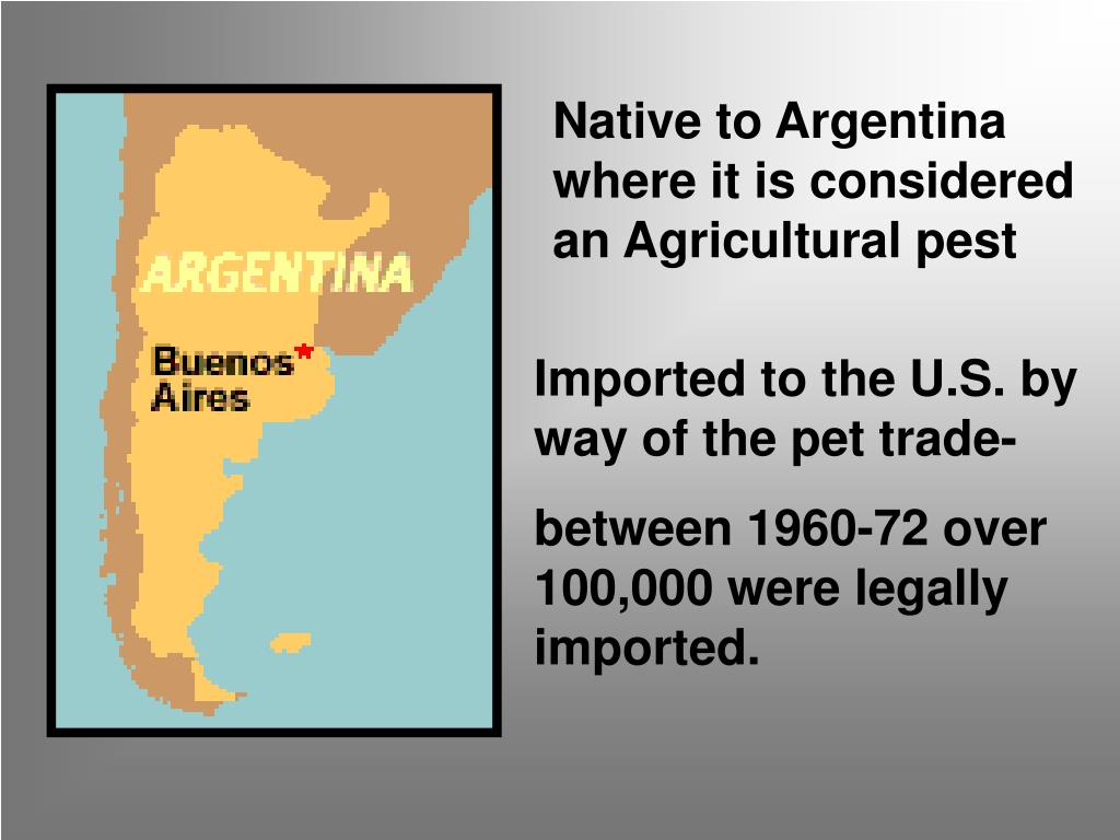 Native to Argentina where it is considered an Agricultural pest