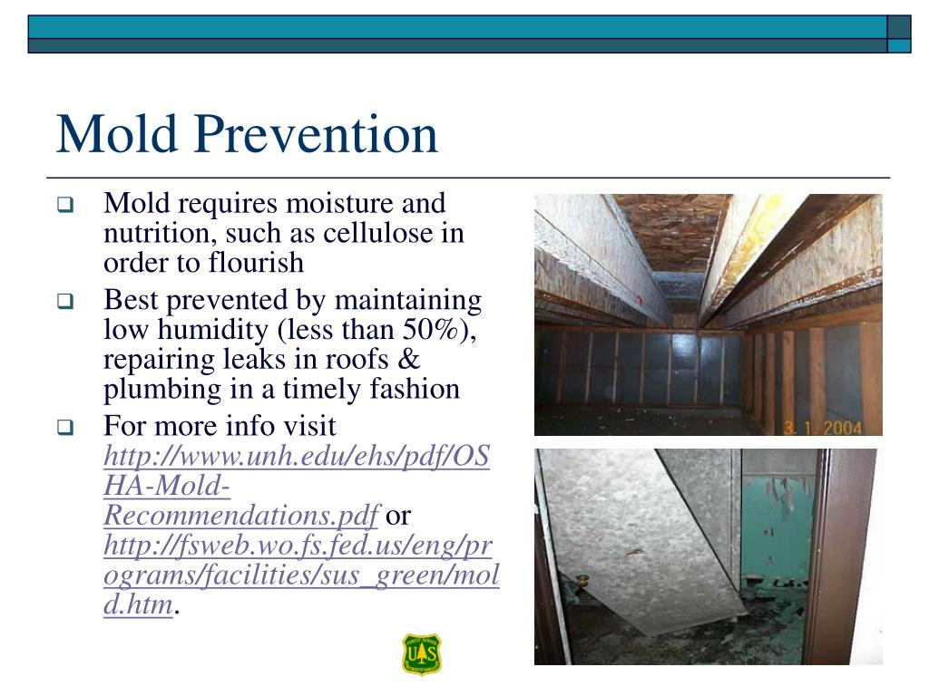 Mold requires moisture and nutrition, such as cellulose in order to flourish