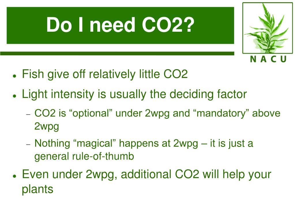 Do I need CO2?