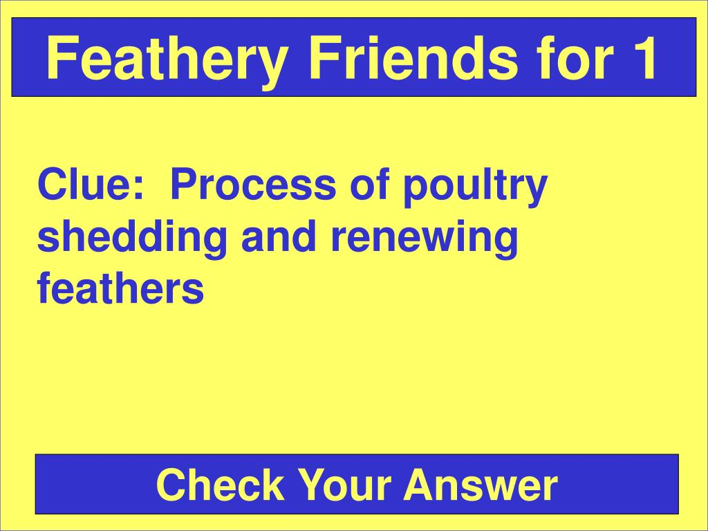 Feathery Friends for 1