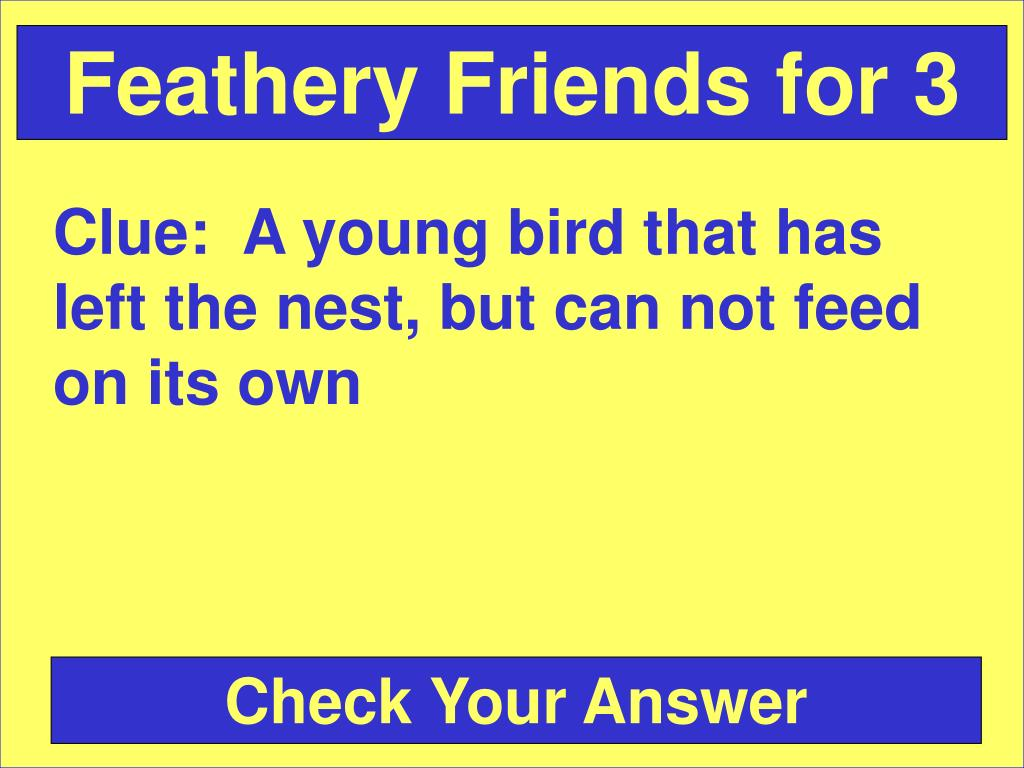Feathery Friends for 3