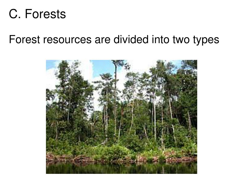 C. Forests