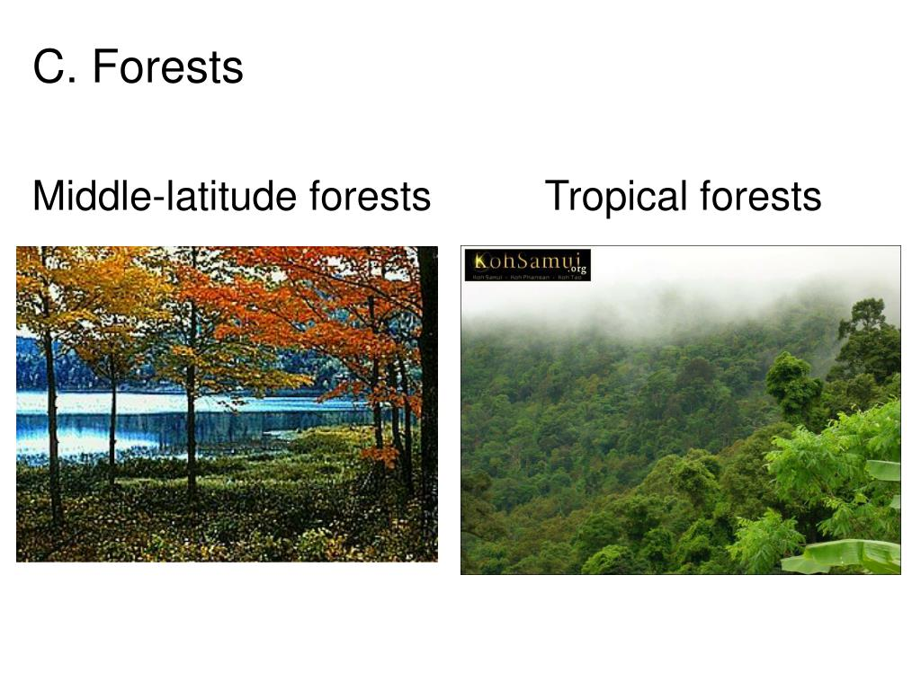 Middle-latitude forests          Tropical forests