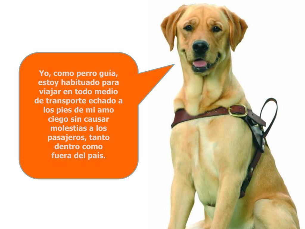 Yo, como perro guía, estoy habituado para viajar en todo medio de transporte echado a los pies de mi amo ciego sin causar molestias a los pasajeros, tanto dentro como