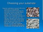 choosing your substrate