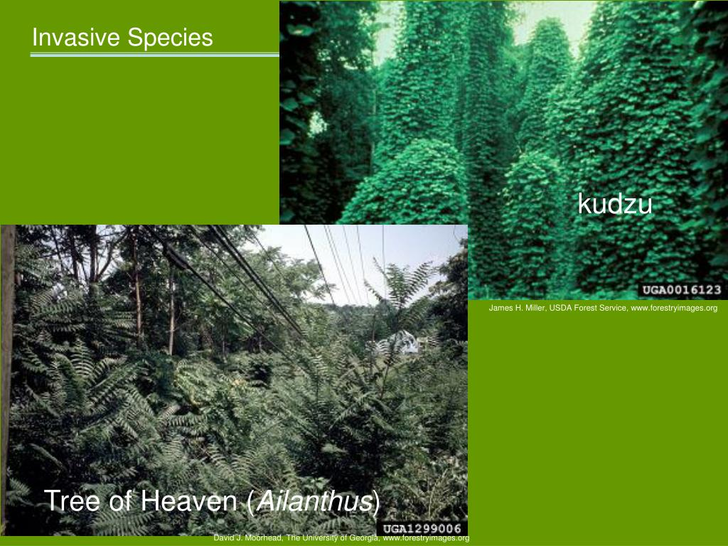 Examples of plants