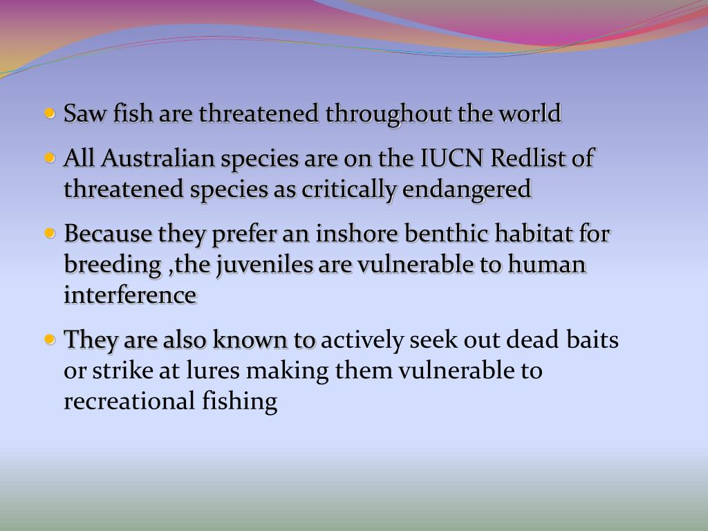 Saw fish are threatened throughout the world