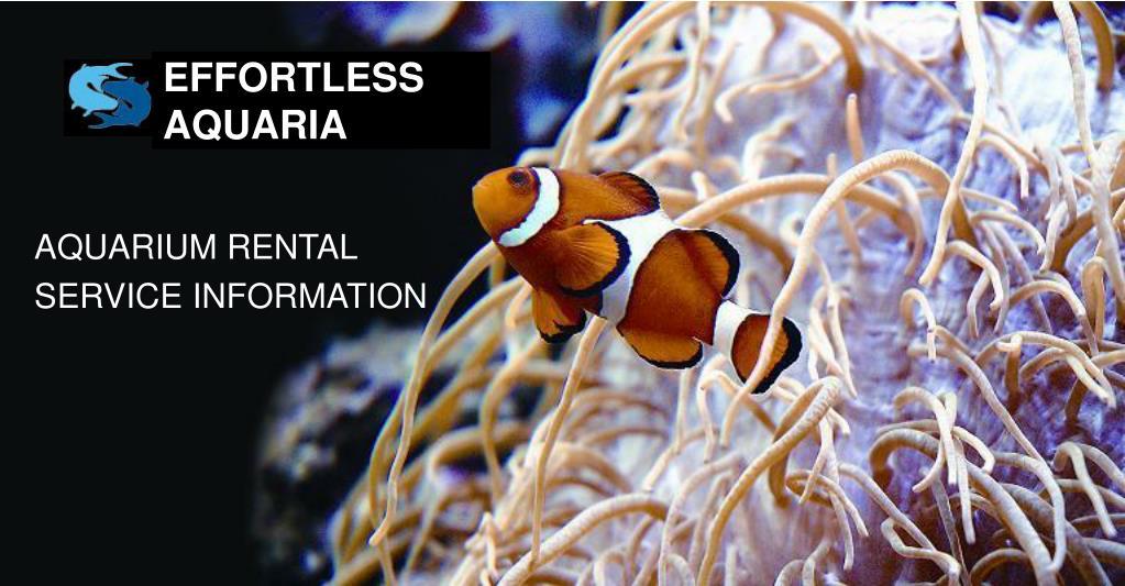 aquarium rental service information l.