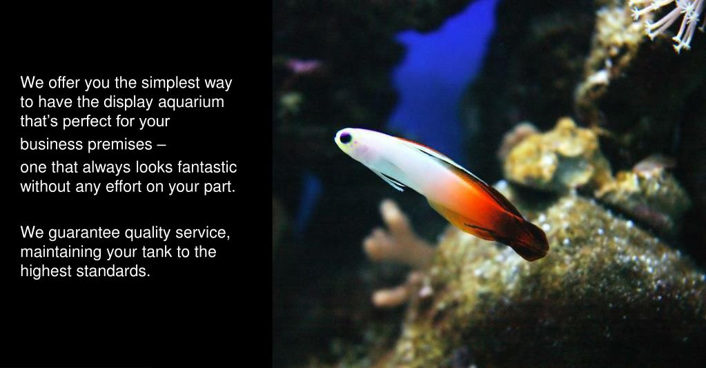 We offer you the simplest way to have the display aquarium that's perfect for your