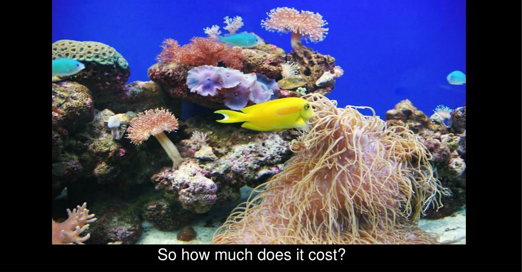 So how much does it cost?