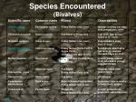 species encountered bivalves