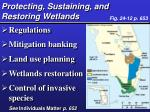 protecting sustaining and restoring wetlands
