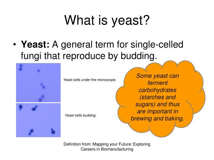 yeast and different carbohydrate substrates essay The combination of yeast cells and nutrients (cereal grains) formed a fermentation system in which the organisms consumed the nutrients for their own growth and produced by-products (alcohol and carbon dioxide gas) that helped to make the bever­age.