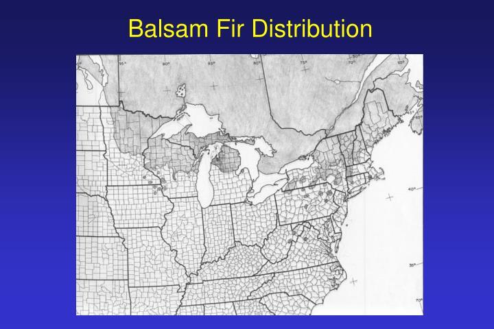 Balsam Fir Distribution