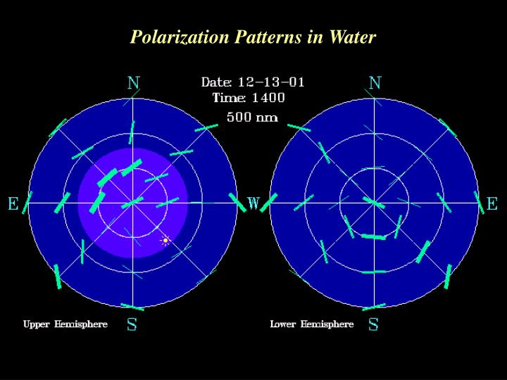Polarization Patterns in Water