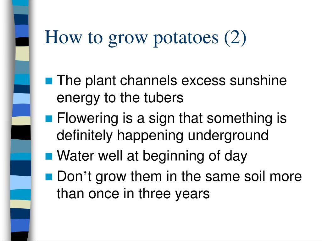 How to grow potatoes (2)