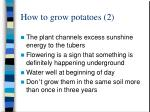 how to grow potatoes 2