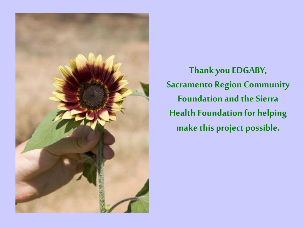 Thank you EDGABY,  Sacramento Region Community Foundation and the Sierra Health Foundation for helping make this project possible.