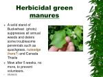 herbicidal green manures