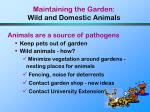 maintaining the garden wild and domestic animals