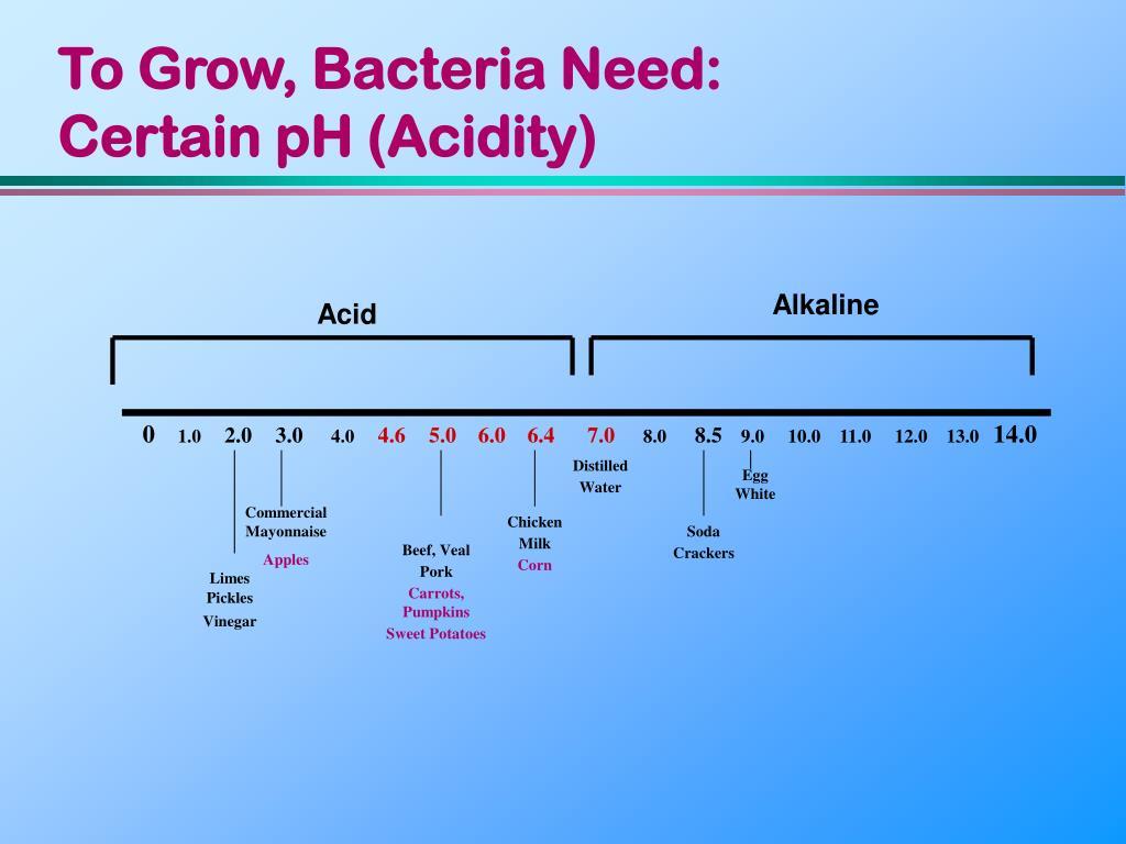 To Grow, Bacteria Need: