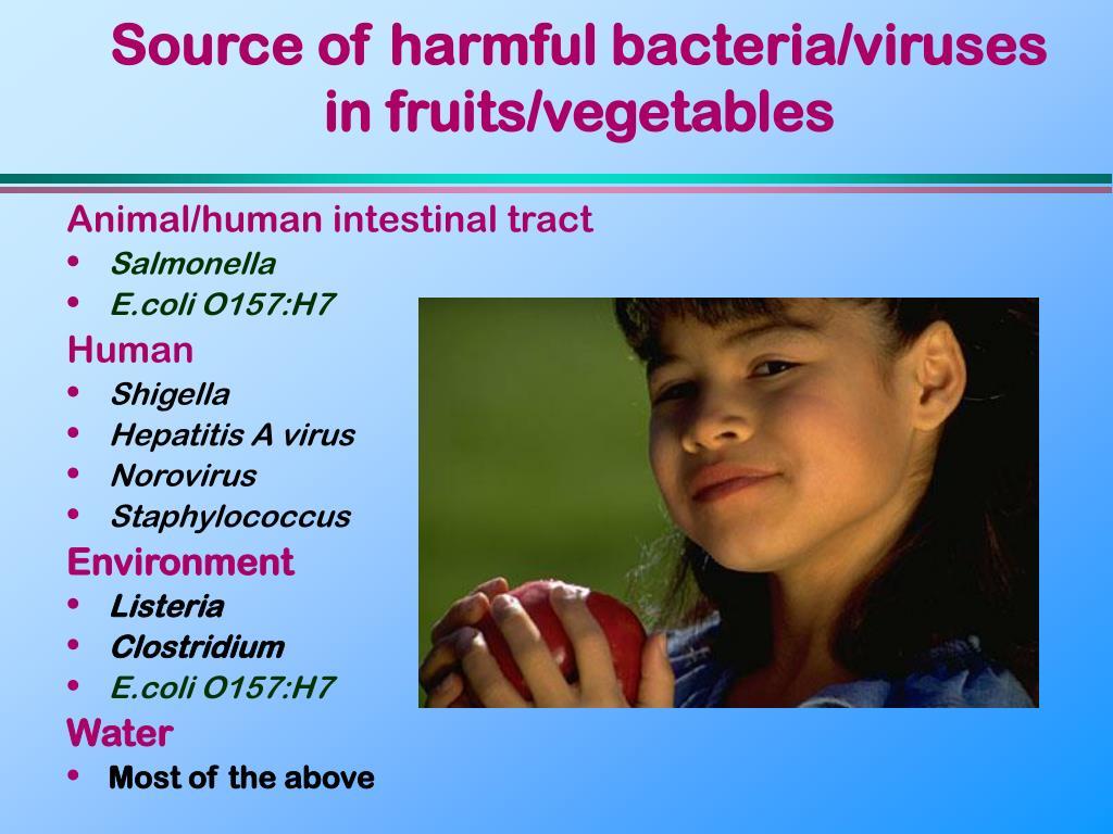 Source of harmful bacteria/viruses in fruits/vegetables