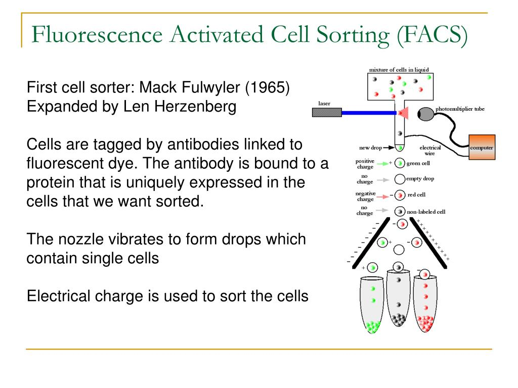 PPT - Gene expressions analysis by massively parallel