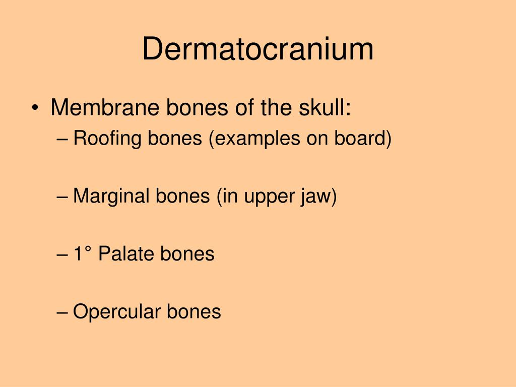 Ppt Cranial And Visceral Skeletons Powerpoint