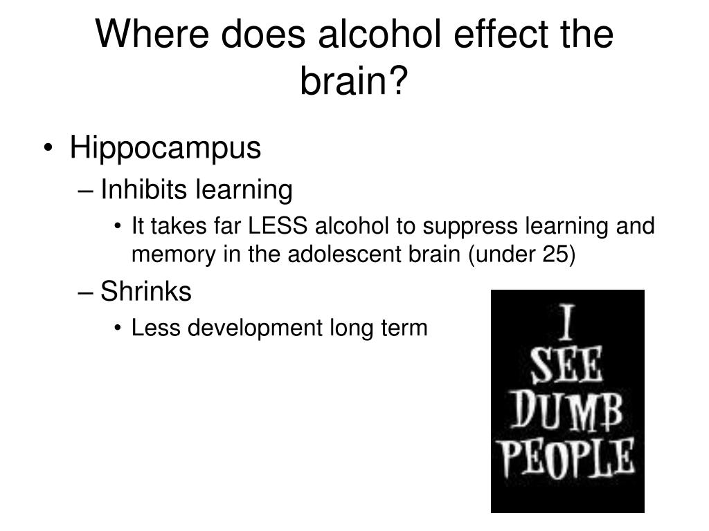 Where does alcohol effect the brain?